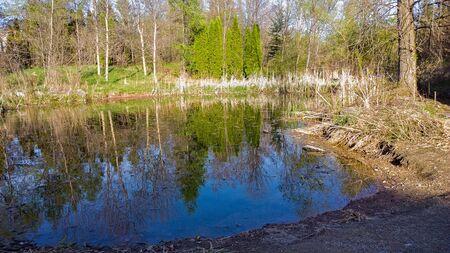 freshwater: pond
