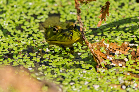coldblooded: frog