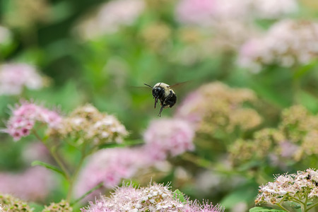 Bee in closeup shot Фото со стока - 42826050