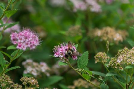 Bee in closeup shot  Фото со стока