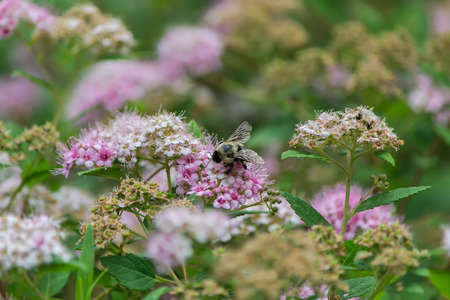 Bee in closeup shot  Banco de Imagens