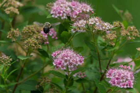 Bee in closeup shot Фото со стока - 42826233