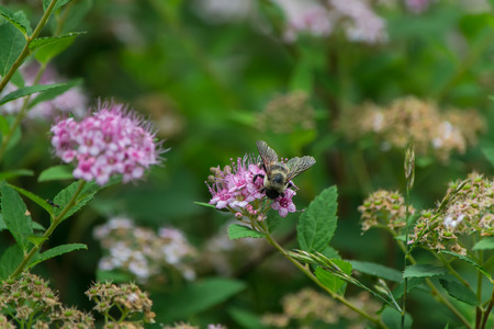 Bee in closeup shot Фото со стока - 42826234