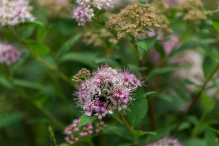 Bee in closeup shot Фото со стока - 42826235