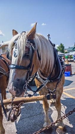 blinders: Horses doing work Stock Photo