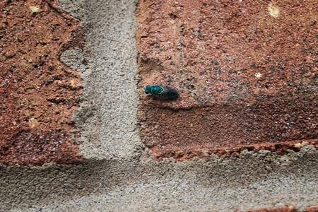 green fly on brick Reklamní fotografie - 45817201
