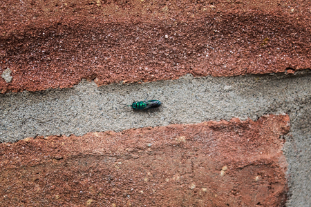 green fly on brick