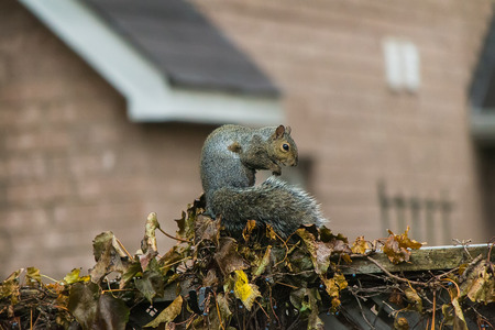 Squirrel on fence Imagens