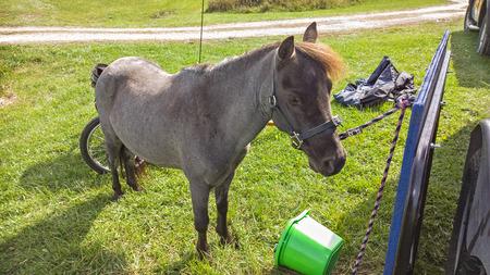 horse collar: Pony Stock Photo