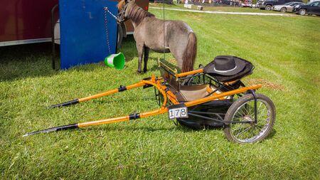 horse collar: equine