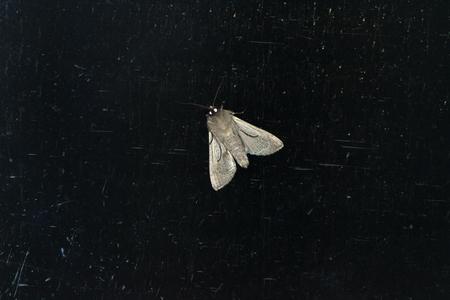 moth: Night Moth