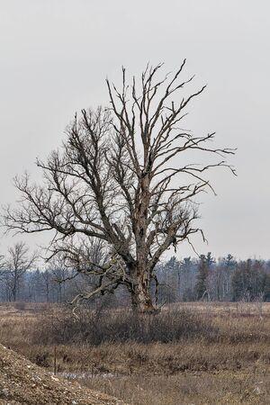 brocken: Tree