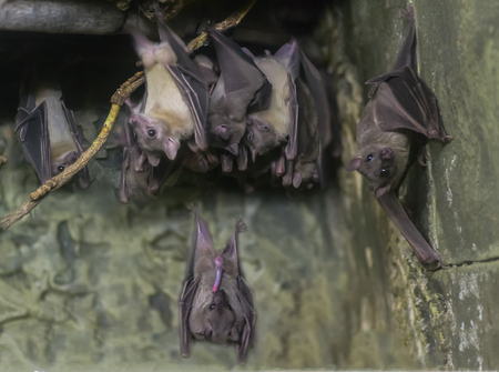 Bats in upside-down position