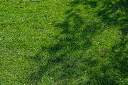 Gree Grass