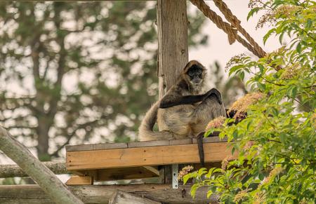 Monkey on Board Reklamní fotografie