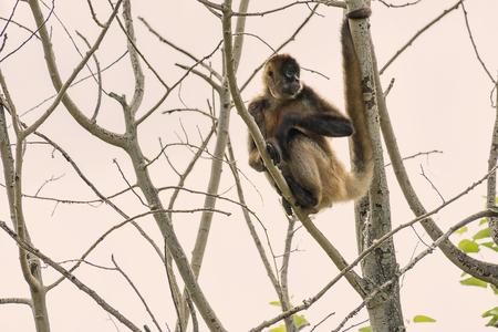 Monkey in a tree Reklamní fotografie