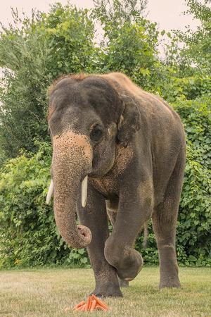 Elephant Фото со стока