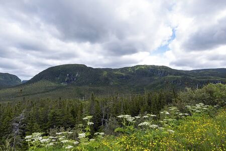 gros morne national park Banque d'images - 131487495