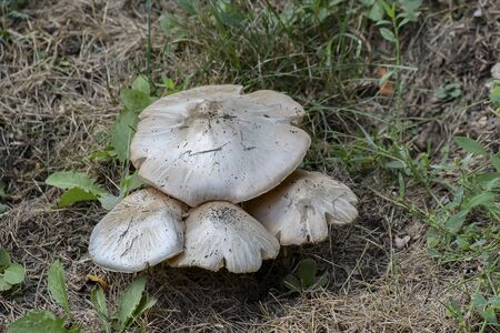 white and brown mushrooms growing wild