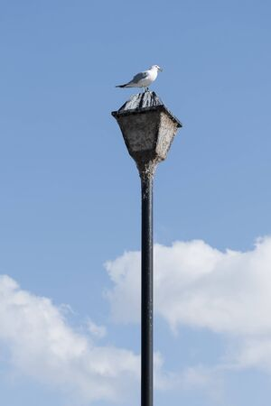 a seagull perched on top of an old lamppost.