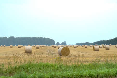 A summer field of hay bales Stock Photo