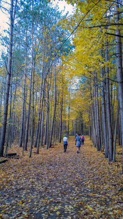 A warm fall golden path Stock Photo