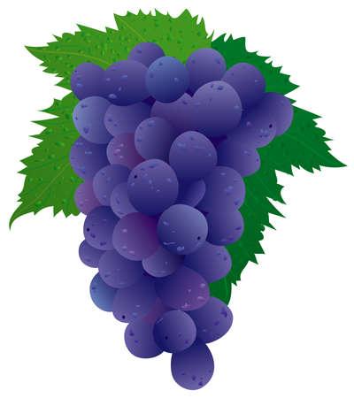 Grape (black) Vector