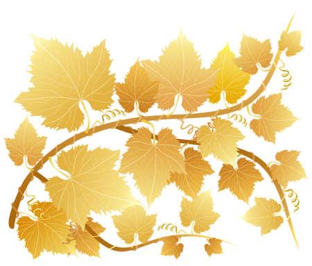 Grape autumn Vector