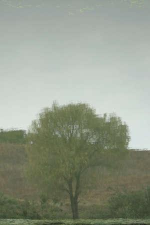 reflexion: �rbol de reflexi�n en el r�o. Escena de oto�o.