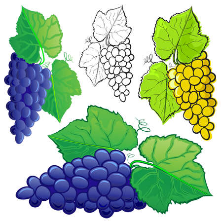 basic candy: Uvas