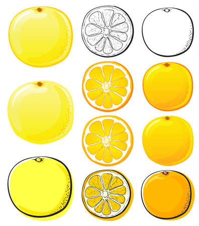 Orange & Grapefruit Stock Vector - 3704722