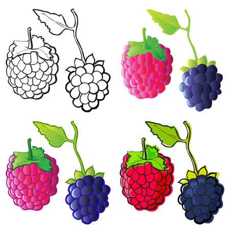 raspberry: Raspberry & Blackberry