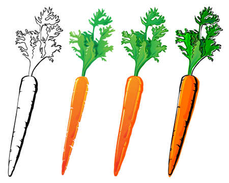 Carrot set. Each in separated layer. Vector