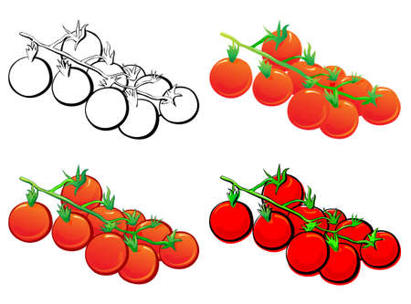 Cherry Tomato set. Each in separated layer. Vector