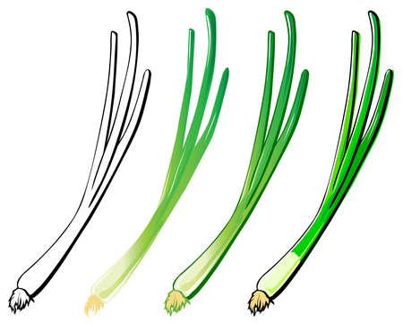 cebollas: J�venes cebolla conjunto. En cada capa separada.