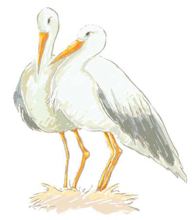 migratory birds: Stork couple vector Illustration