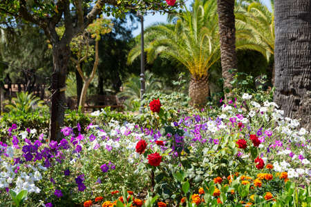 Flowery garden with petunias, roses, palm trees and other trees. Multicolor, beautiful landscape in Spanish garden Standard-Bild