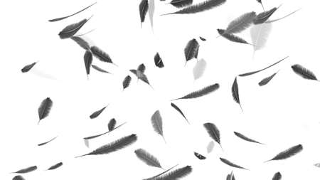 Falling feathers on a white background 4k