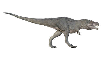 3d render of Tyrannosaurus rex on a white background
