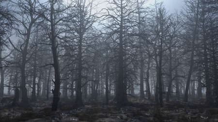 3d render animation of flying through a scary forest Stok Fotoğraf