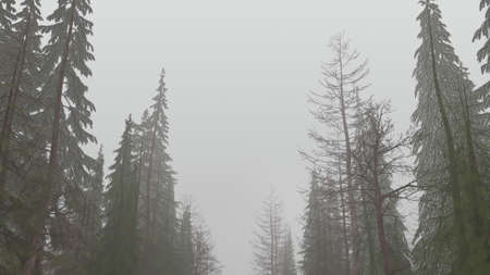 3d render of a mystical forest in the daytime in fog Stok Fotoğraf