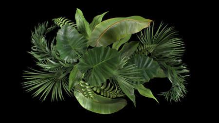 3d render composition of tropical plants on a black blackground