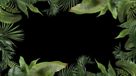 3d render frame from tropical plants on a black blackground Archivio Fotografico