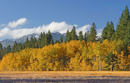 Early Morning Aspen Grove at Fallen Leaf Lake in the Lake Tahoe Area Stock Photo - 2368271