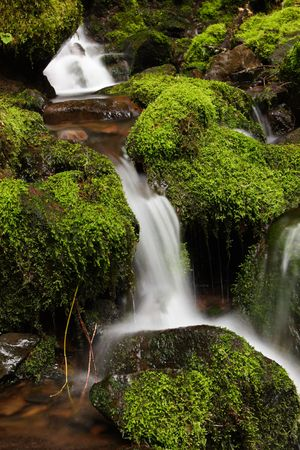 Small cascading waterfall amid moss covered rocks on the canyon trail at Silver Falls State Park photo