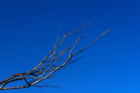 Bare branches against a dark blue sky
