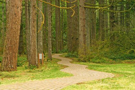 Brick Pathway door het bos in Silver Falls State Park, Oregon, USA