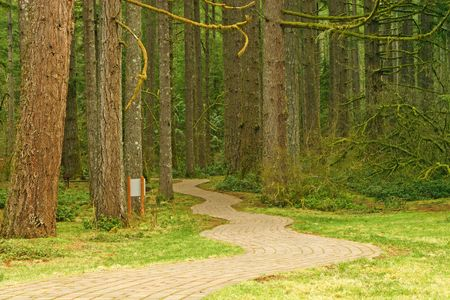 Brick Pathway through the forest at Silver Falls State Park, Oregon, USA photo