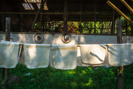 Naturally acquired Indian rubber hanging in sheets to dry