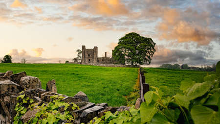 Ruins of old 12th century Bective Abbey, large green tree on side and surrounded by wall and green fields. Dramatic sky sunset. Count Meath, Ireland Stok Fotoğraf